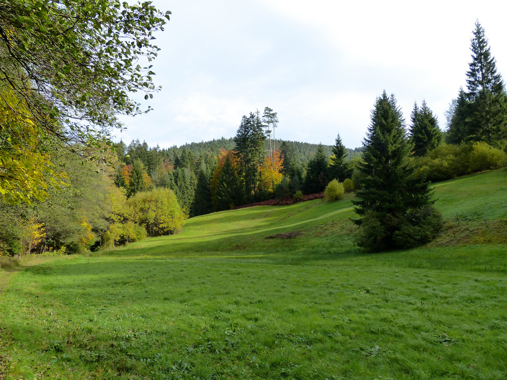 Black Forest: Meadow by romanboed, on Flickr