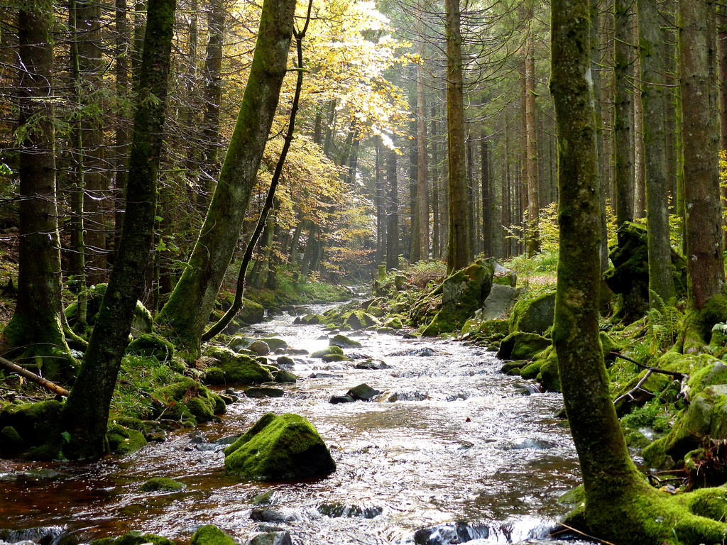 Black Forest: Stream by romanboed, on Flickr