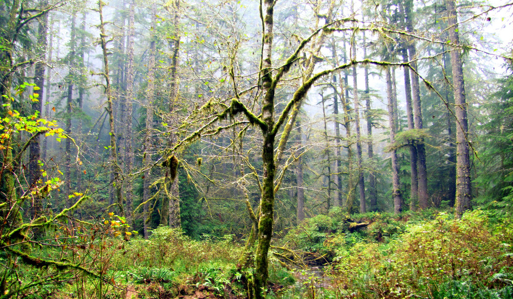 Elliott State Forest by #ODF, on Flickr