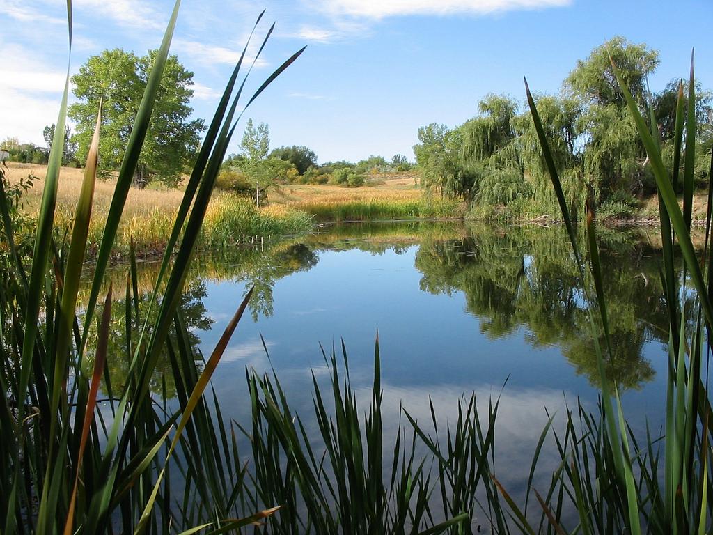 Friends Pond by USFWS Mountain Prairie, on Flickr
