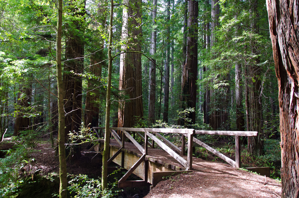 Redwood Forest and Bridge by Scrubhiker (USCdyer), on Flickr