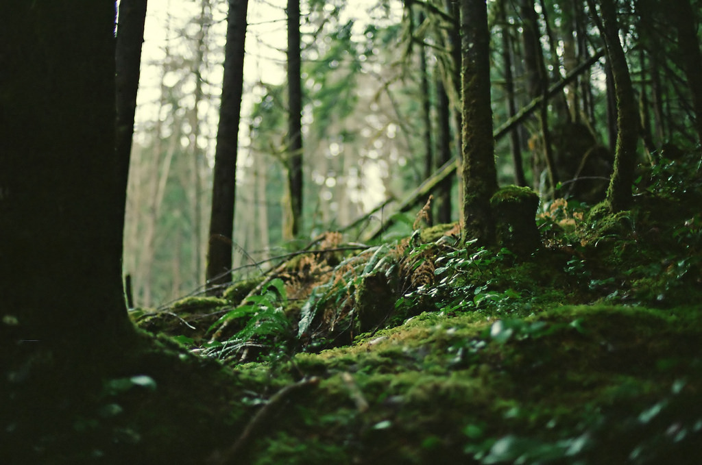 forest floor moss and ferns by cclogg, on Flickr