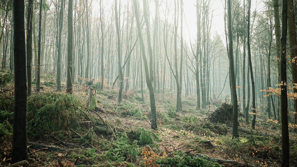 Winter Forest Mist by scotbot, on Flickr