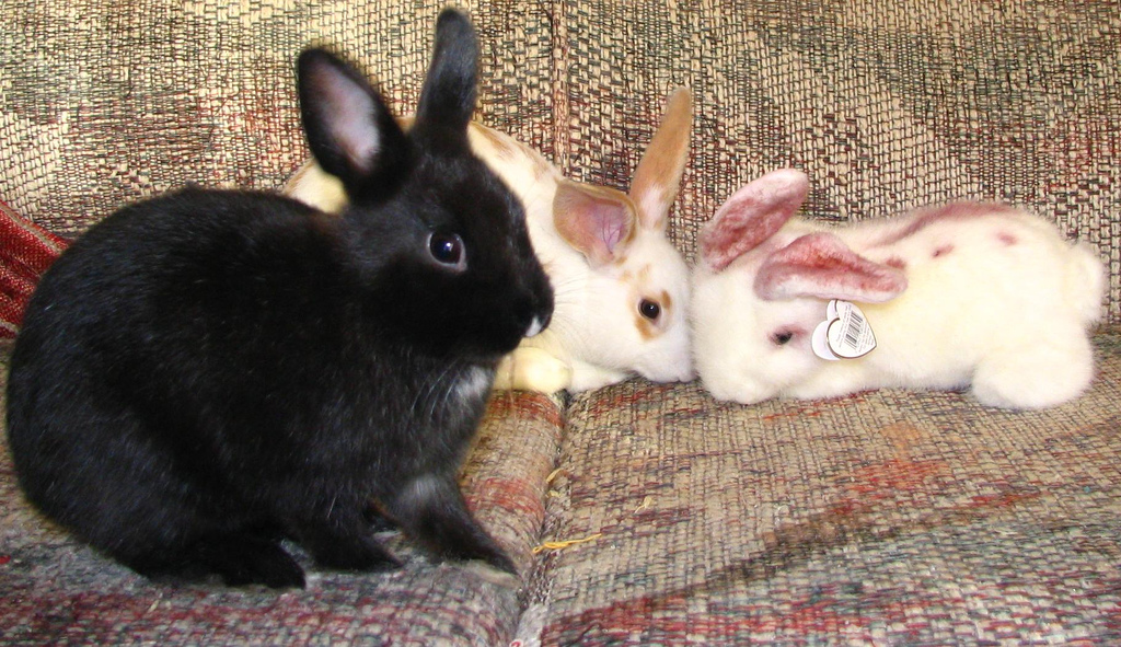 One of these rabbits isn't real - eBunny by SeeMidTN.com (aka Brent), on Flickr