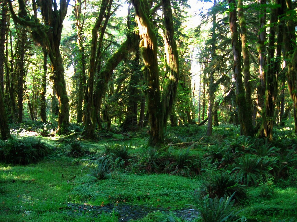 Quinault Rain Forest, Olympic National P by Ken Lund, on Flickr