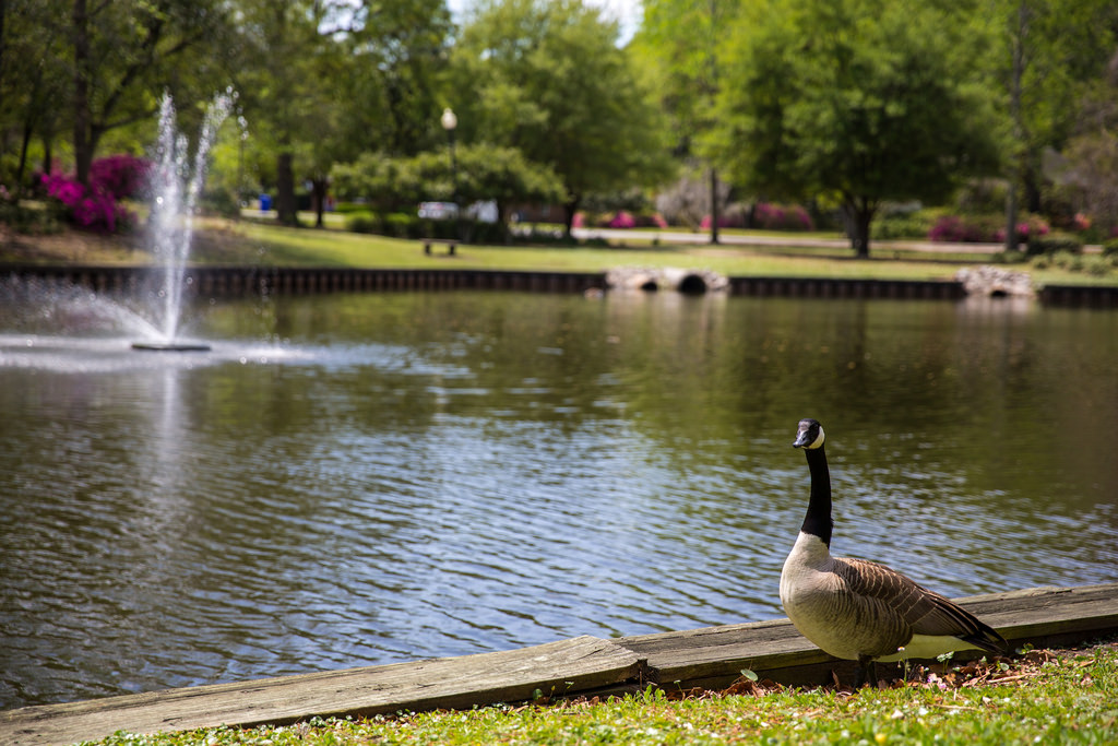 Quarterman Lake (the Duck Pond) on a bea by North Charleston, on Flickr