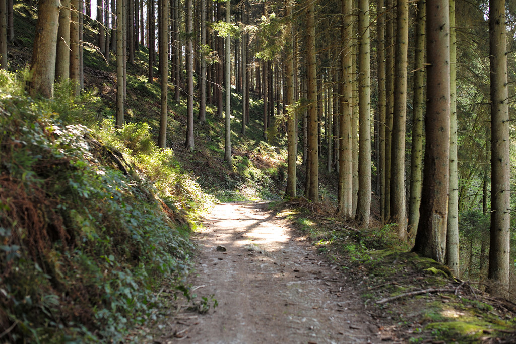 Ardennes Forest Path by romanboed, on Flickr