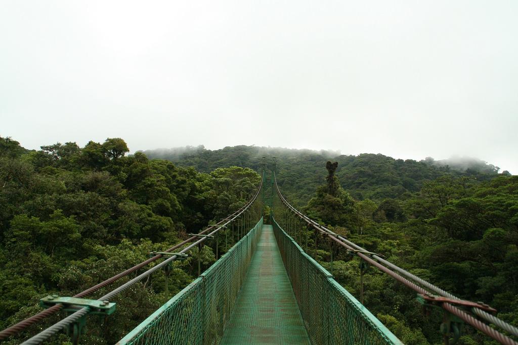 canopy bridge in costa rica by Fran Devinney, on Flickr