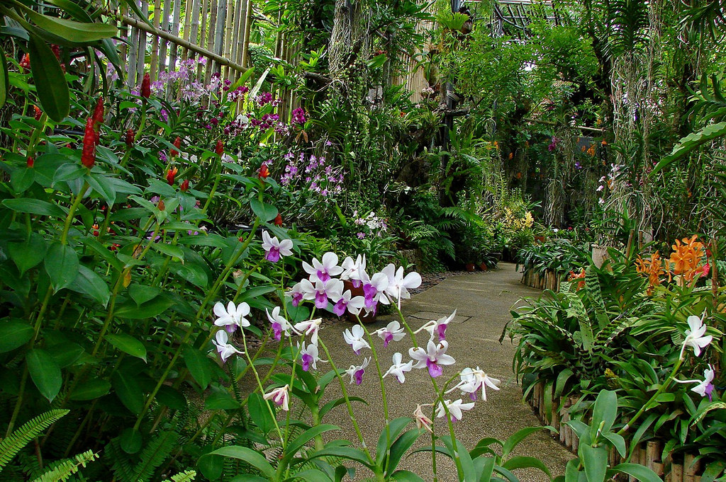 Orchids garden in Phuket Botanical garde by Tatters ✾, on Flickr
