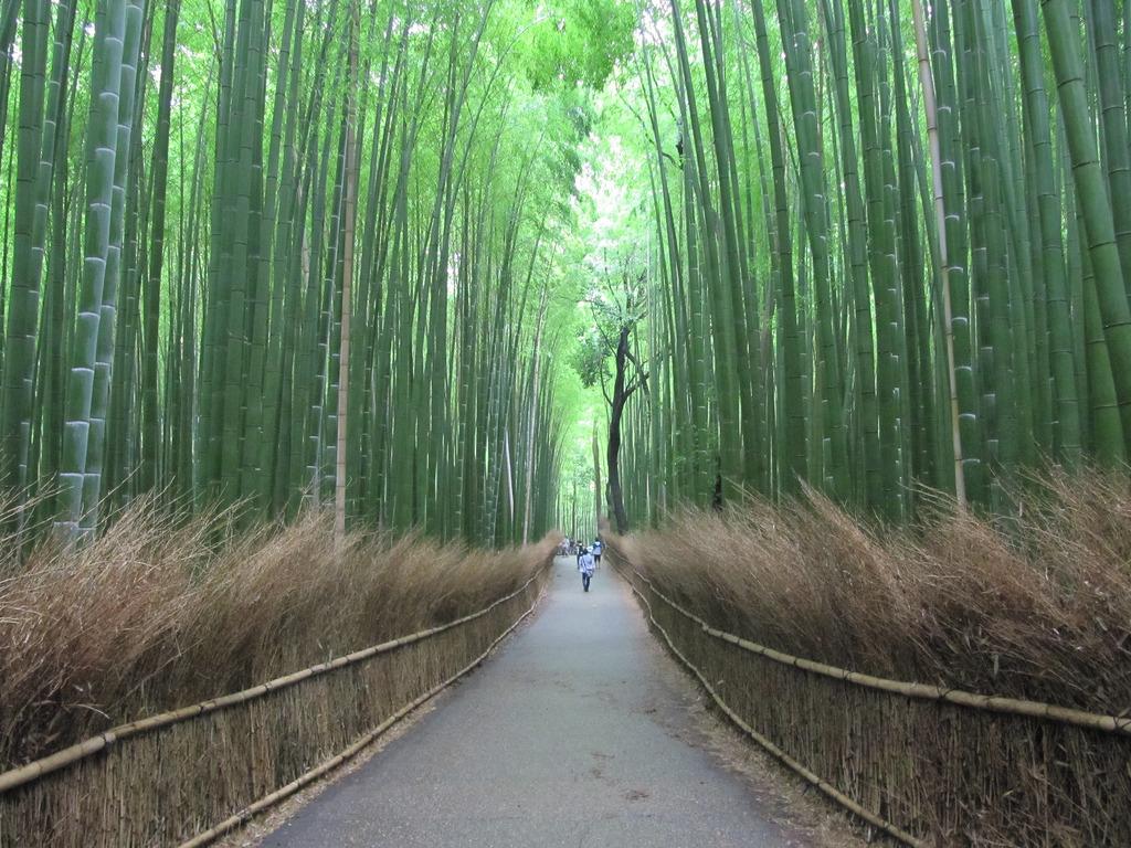Arashiyama by loretahur, on Flickr