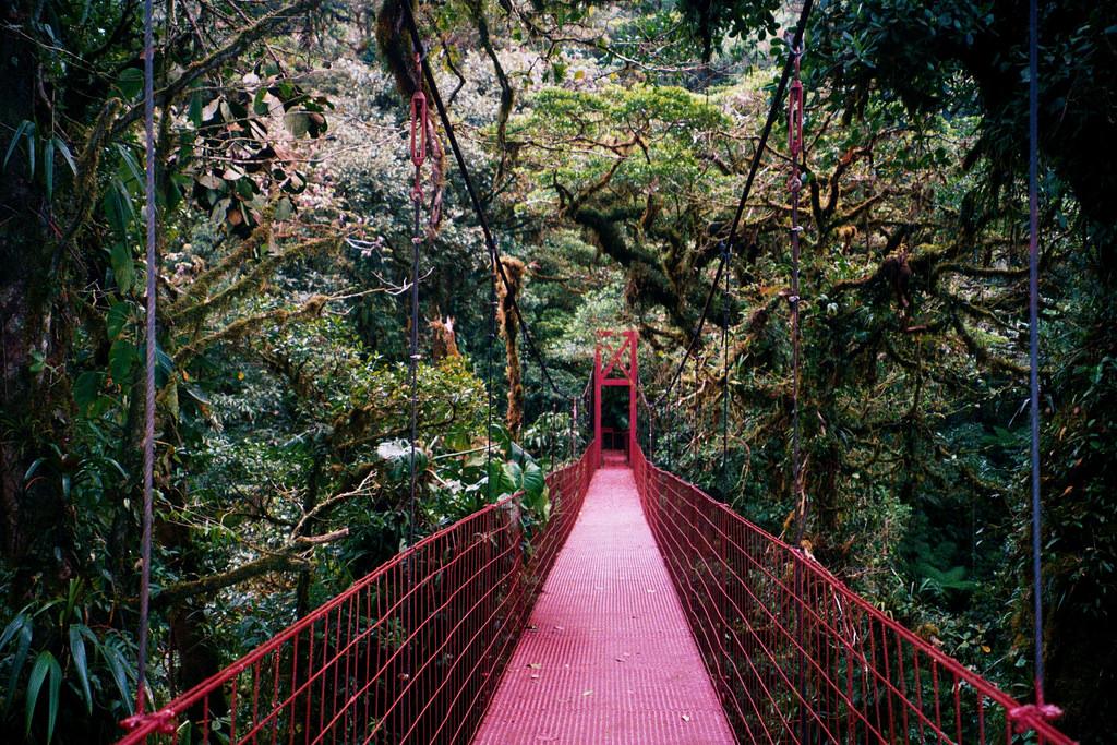 Monteverde Cloud Forest by mikegoren, on Flickr
