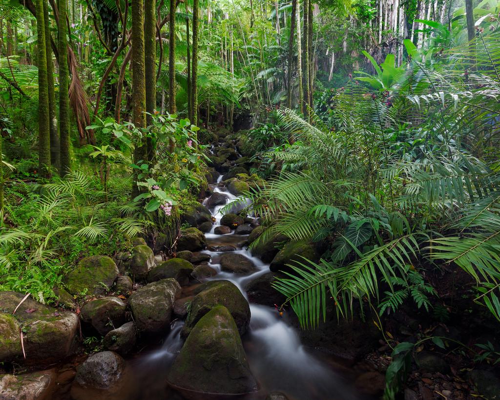 Tropical Stream by jar [o], on Flickr