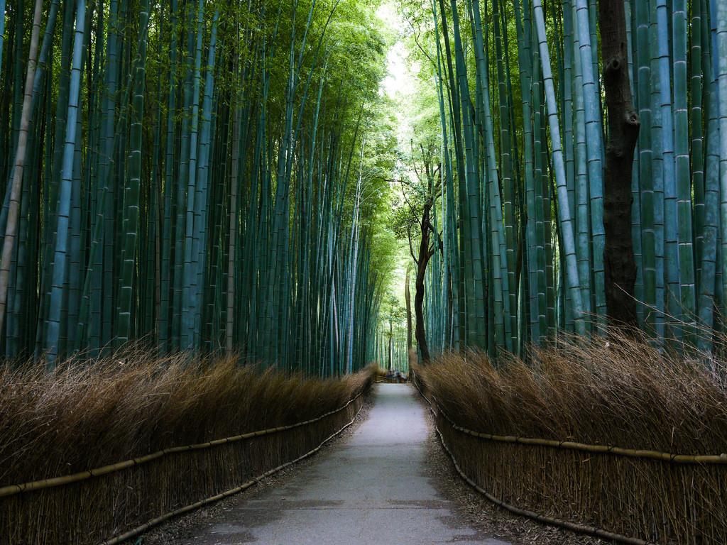 Path of the bamboo - Arashiyama by lublud, on Flickr