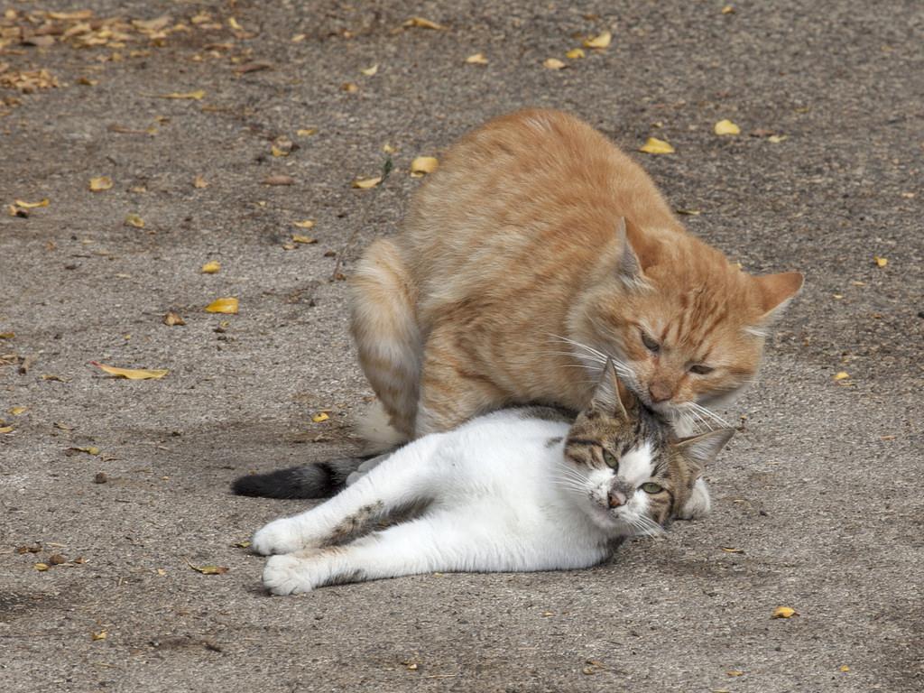 Making Kittens (2) by zeevveez, on Flickr