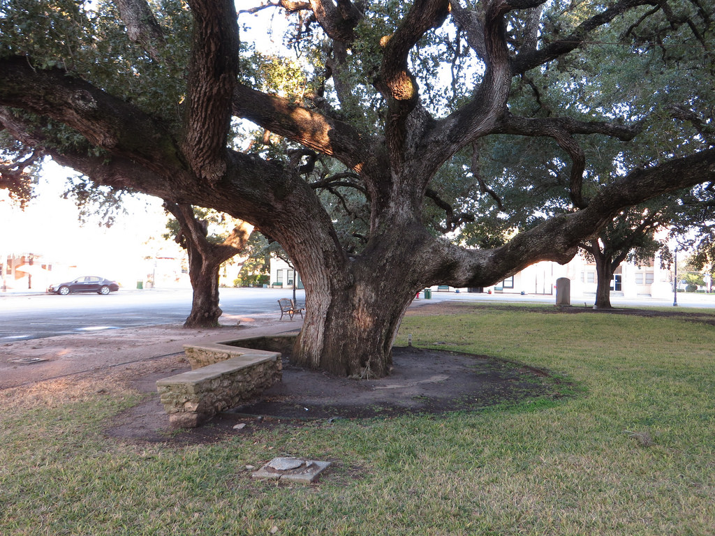 Hanging Tree, Goliad County Courthouse, by Ken Lund, on Flickr
