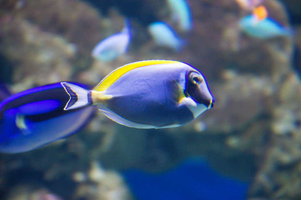 Tropical fish by Infomastern, on Flickr