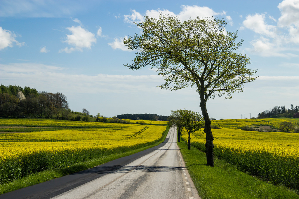 Country road and yellow field by Infomastern, on Flickr