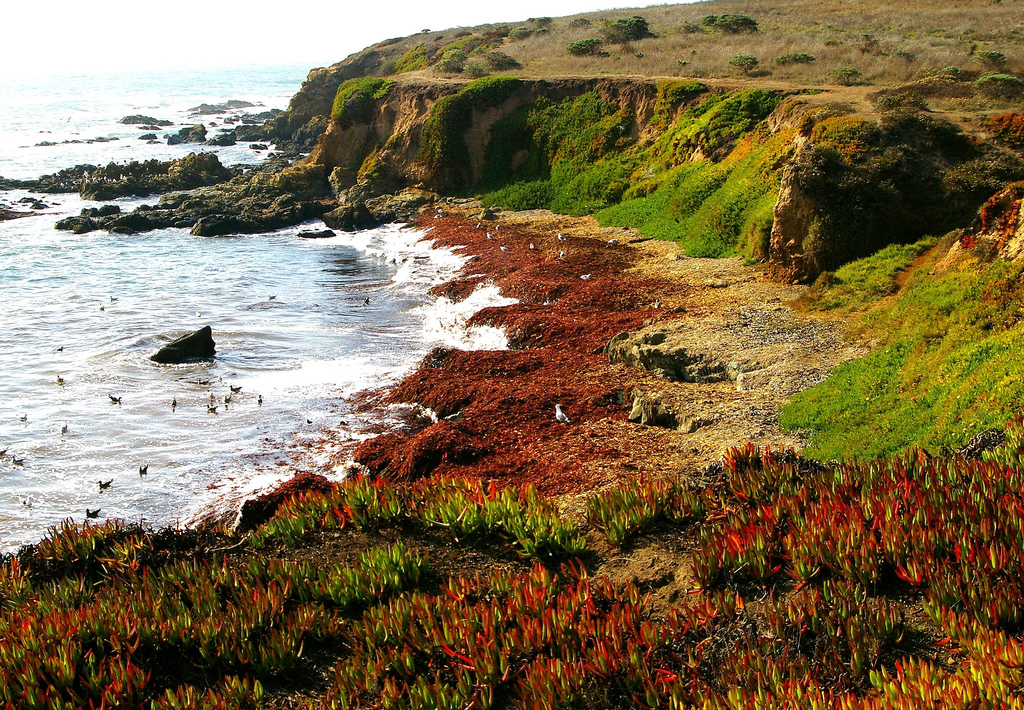 The Colorful Central California Coast by kla4067, on Flickr
