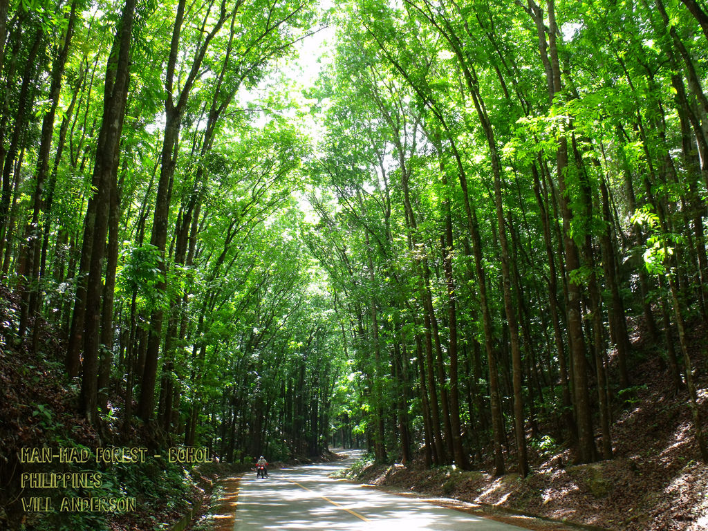 Man-Made Forest Road - Bilar - Bohol - P by Will Anderson Photographs, on Flickr