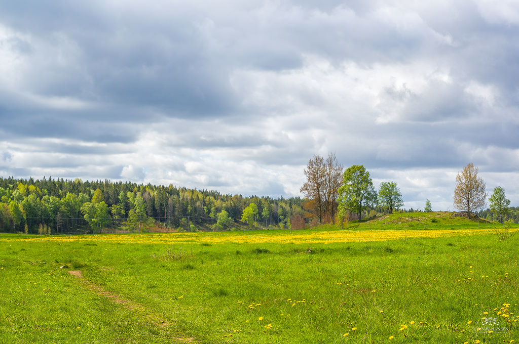 Meadow, dandelions and forest  - Angarns by Tommie Hansen, on Flickr
