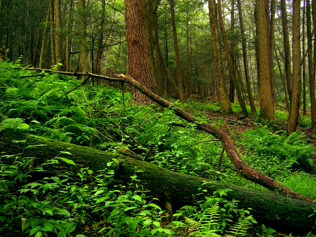 Understory by Nicholas_T, on Flickr