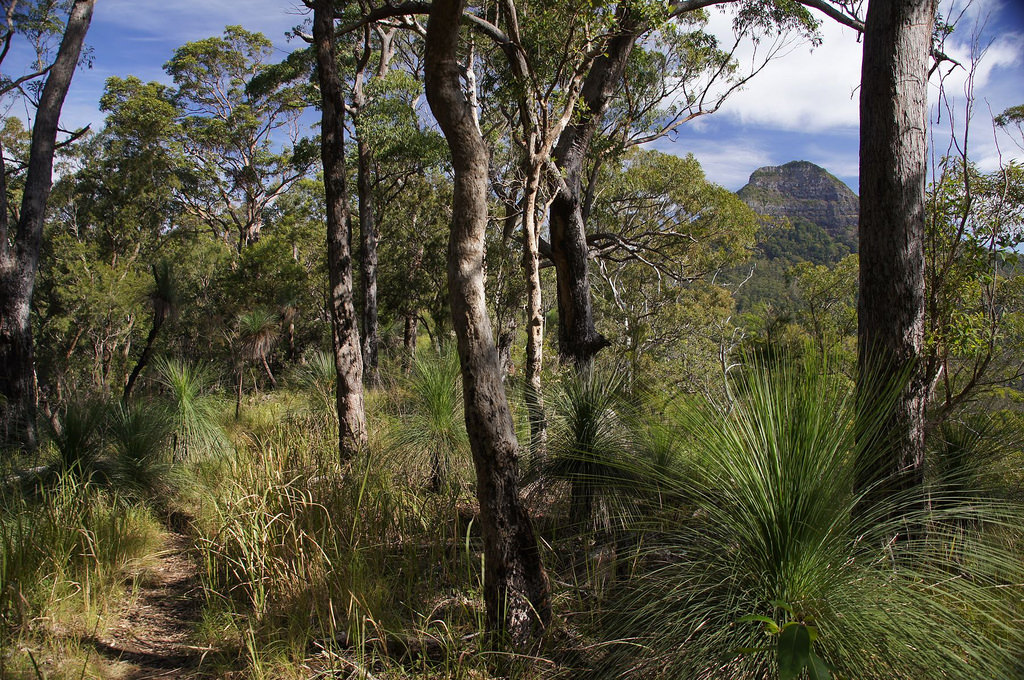 Hike in Mount Mathieson trail.   Spicers by Tatters ✾, on Flickr