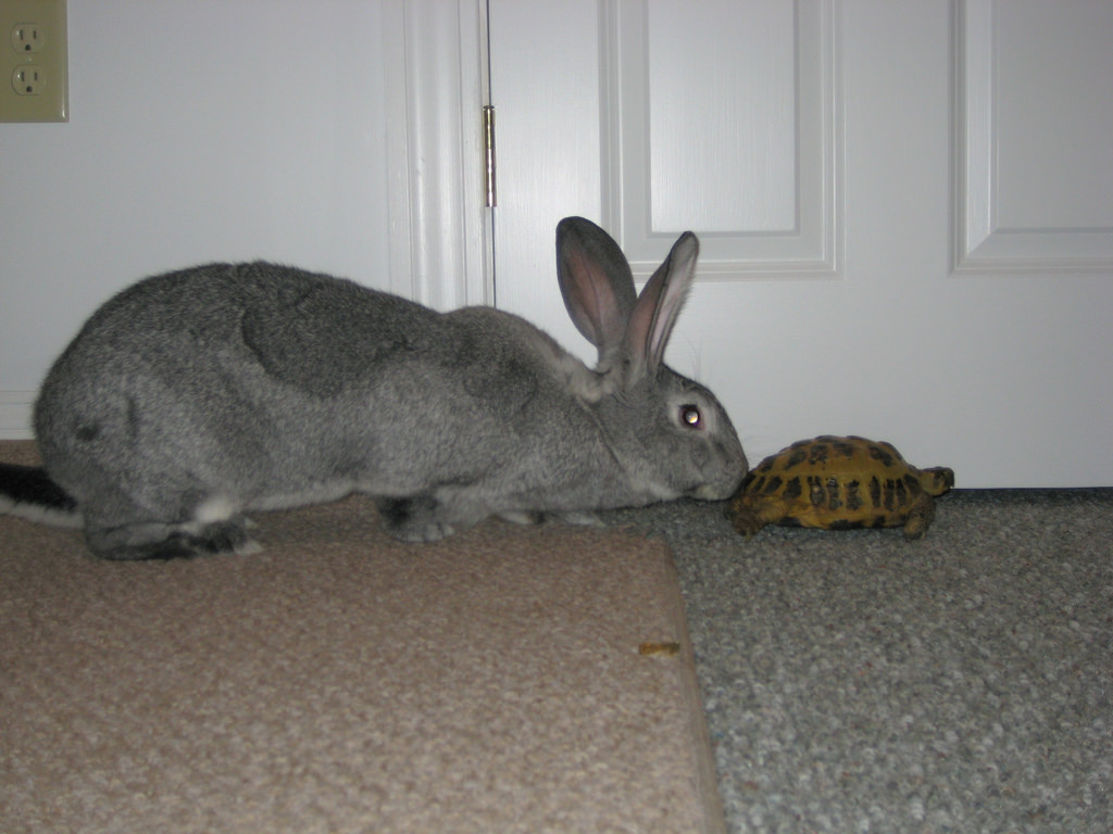 Tortoise and the Hare by BAD RABBIT INC., on Flickr