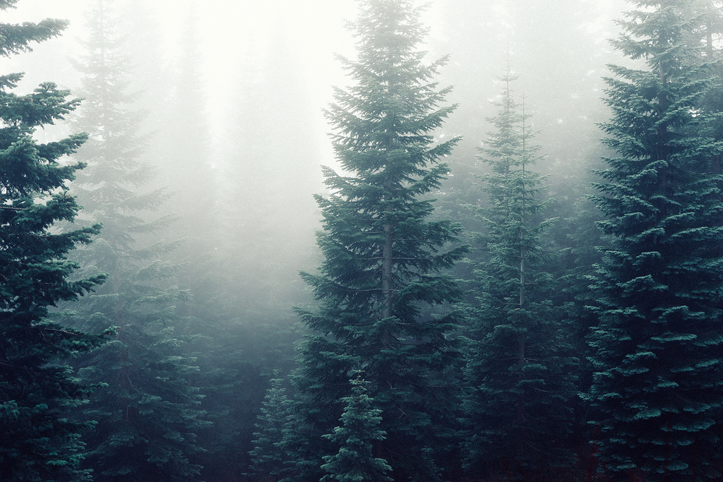 Forest Deep in Fog by Image Catalog, on Flickr