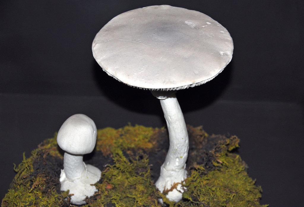 Amanita verna (destroying angel mushroom by James St. John, on Flickr