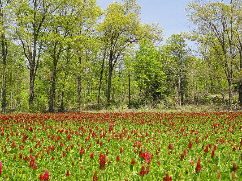 Clover Field off Rd 113 following timber by US Forest Service - Southern Region, on Flickr