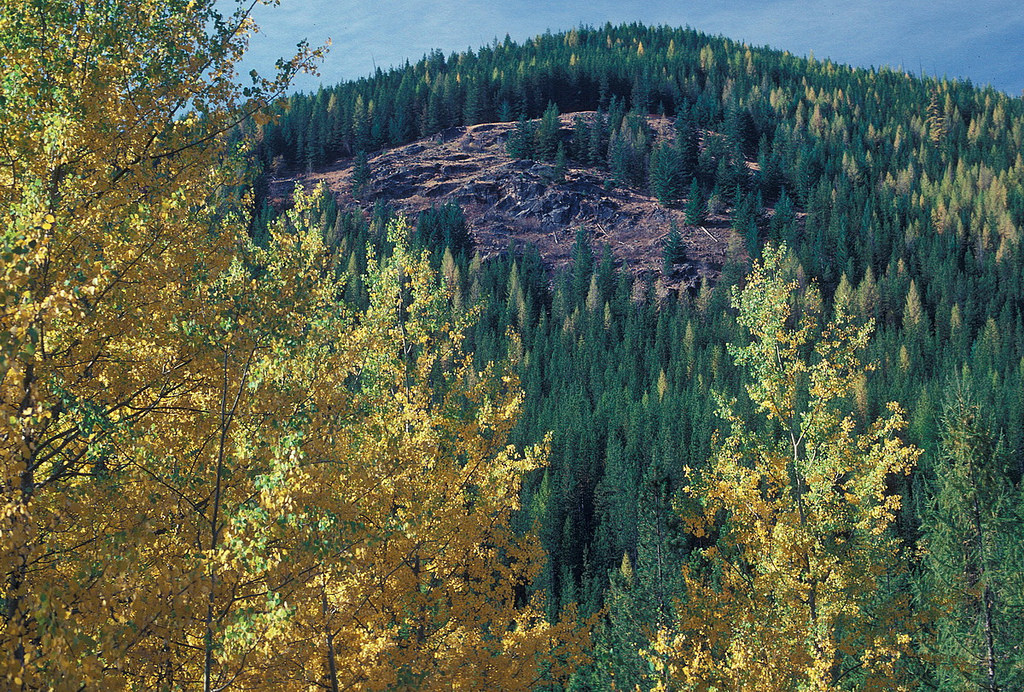 Fall Color 1-Colville National Forest by Forest Service Pacific Northwest Region, on Flickr