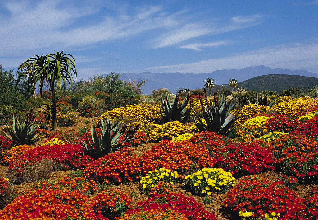 Worcester Karoo flowers - South Africa by South African Tourism, on Flickr
