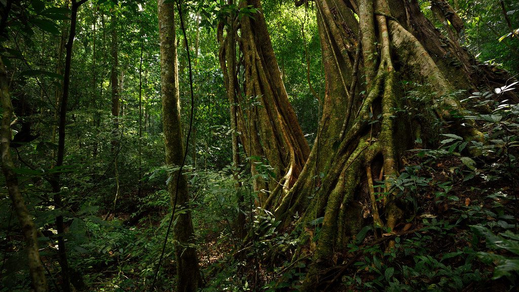 Evergreen forest - jungle in Kaeng Krach by tontantravel, on Flickr