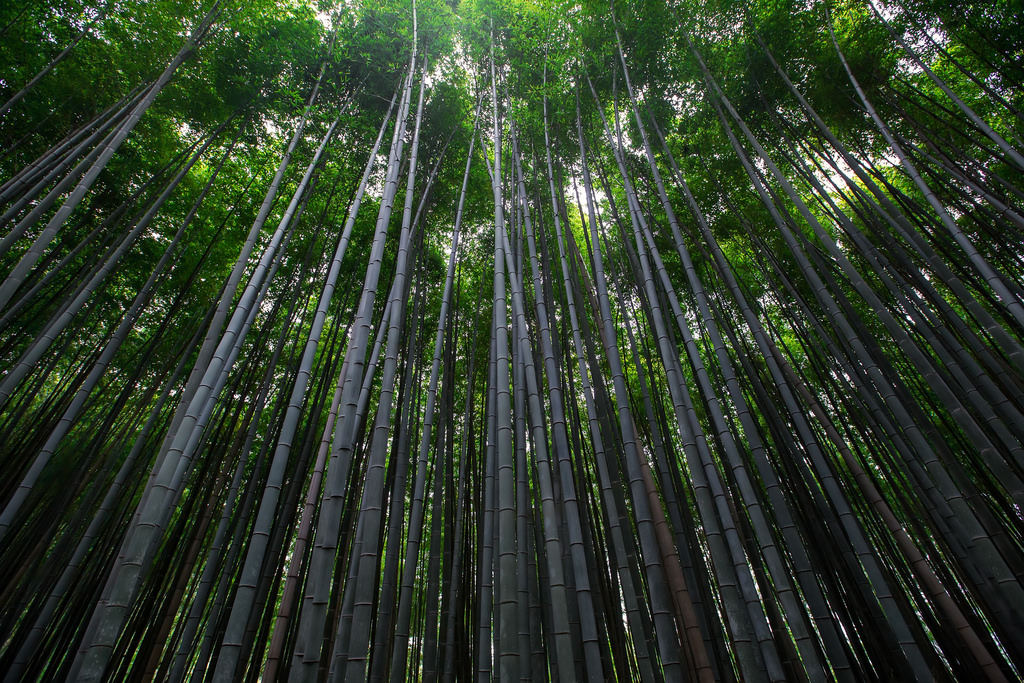 Bamboo Forest, Kyoto, Japan by Lenny K Photography, on Flickr