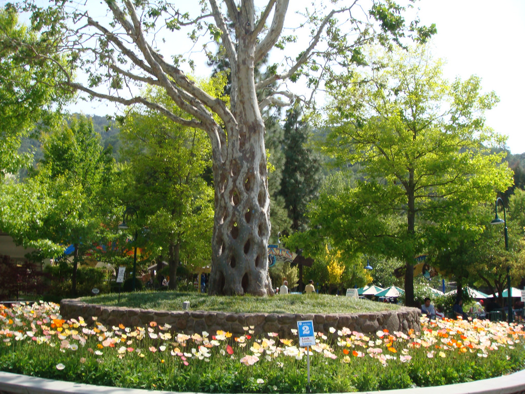 Circus Tree at Gilroy Gardens by milst1, on Flickr