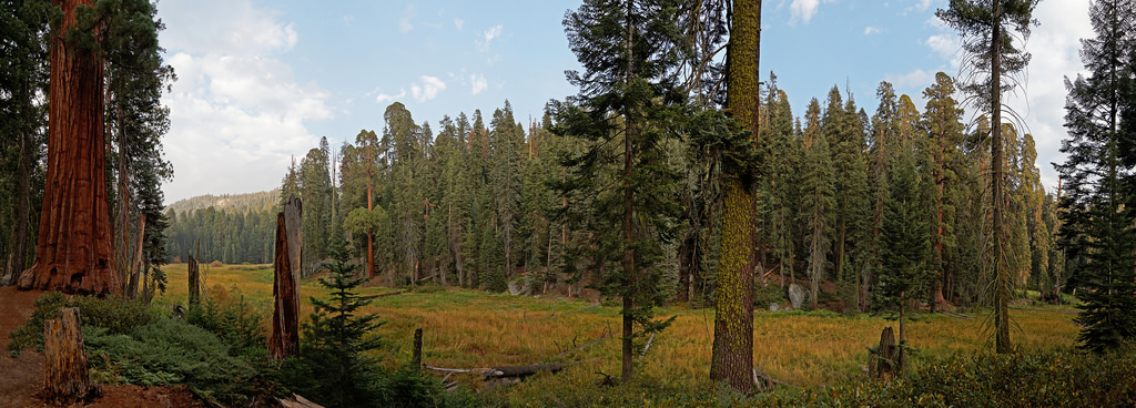 Log meadow in Giant Forest, Sequoia Nati by USDAgov, on Flickr