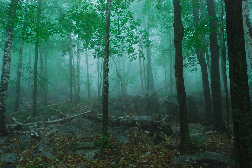 Eerie Forest by wackybadger, on Flickr