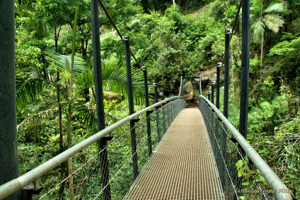 Bridge below Purling Brook Falls by Tatters 10mln views-10 years, on Flickr