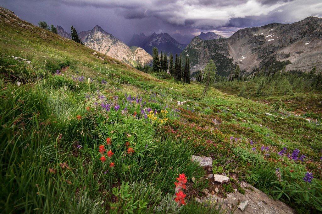 Wildflowers on Hillside, Mt Baker Snoqua by Forest Service Pacific Northwest Region, on Flickr