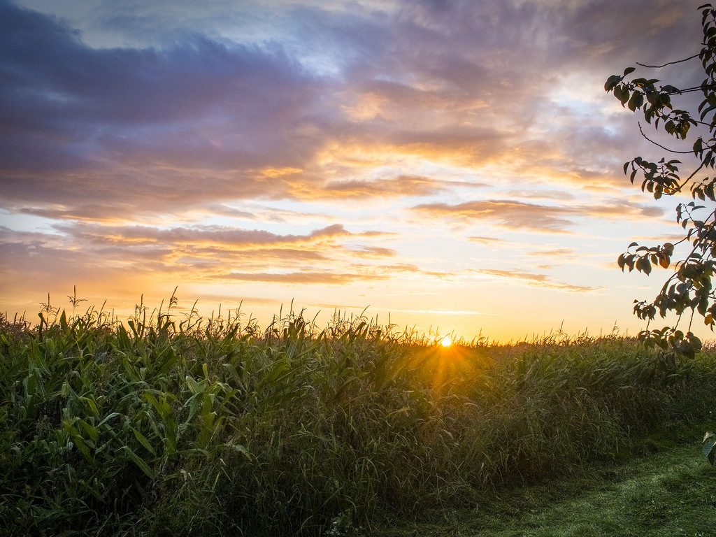 Cornfield Sunset by enneafive, on Flickr