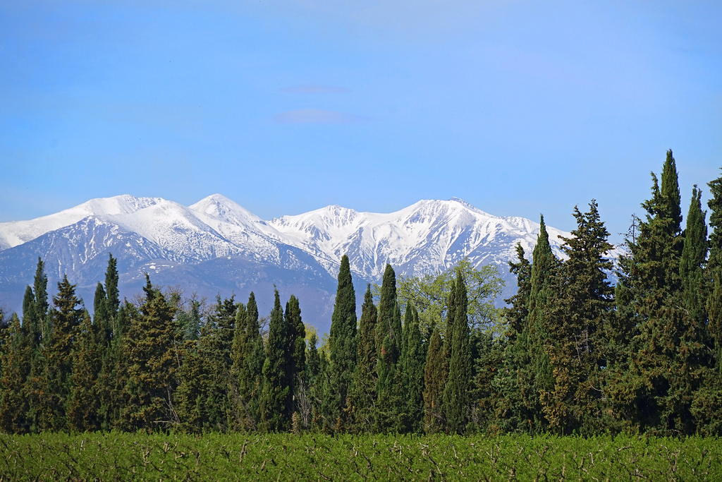 Le massif du Canigou au Printemps (Pyré by dalbera, on Flickr