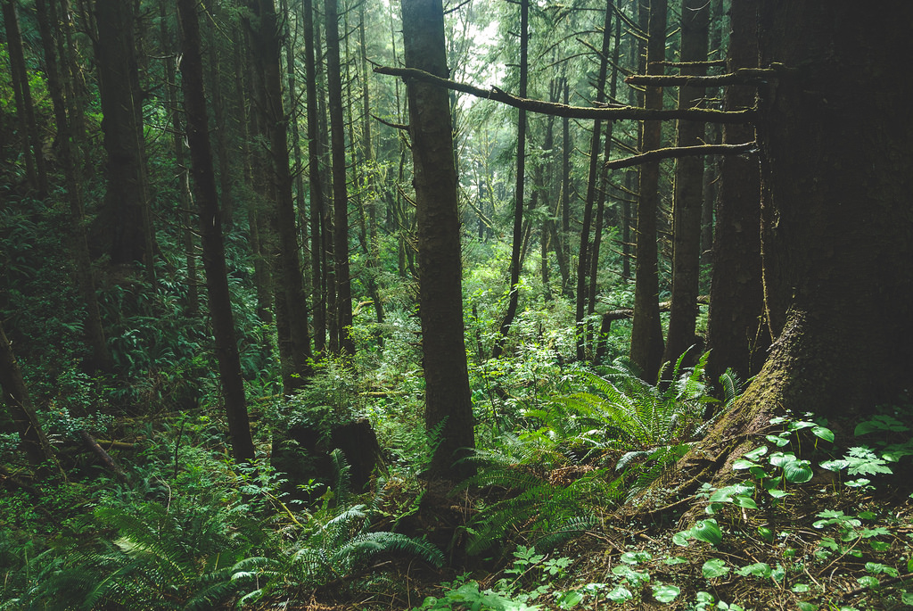 Temperate rain forest, Oregon style by lorenkerns, on Flickr