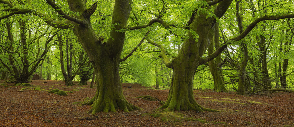 Guardians of the Forest by J McSporran, on Flickr