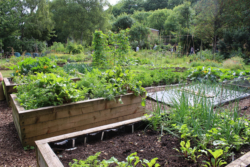 Raised bed organic vegetable garden by Local Food Initiative, on Flickr