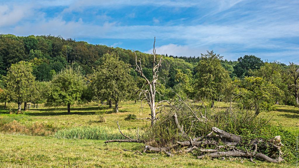 Hoogstamfruitbomen - Zuid-Limburgs lands by Frans Berkelaar, on Flickr