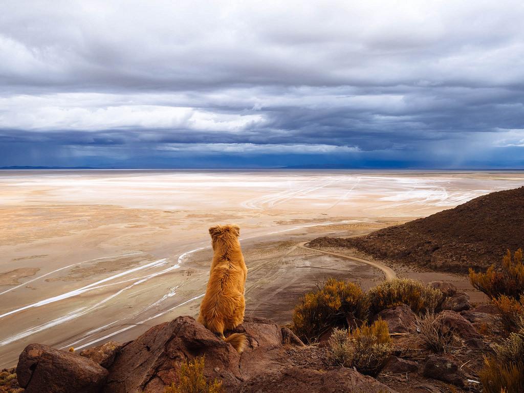 Dog watching over dead sault desert / Hu by wuestenigel, on Flickr