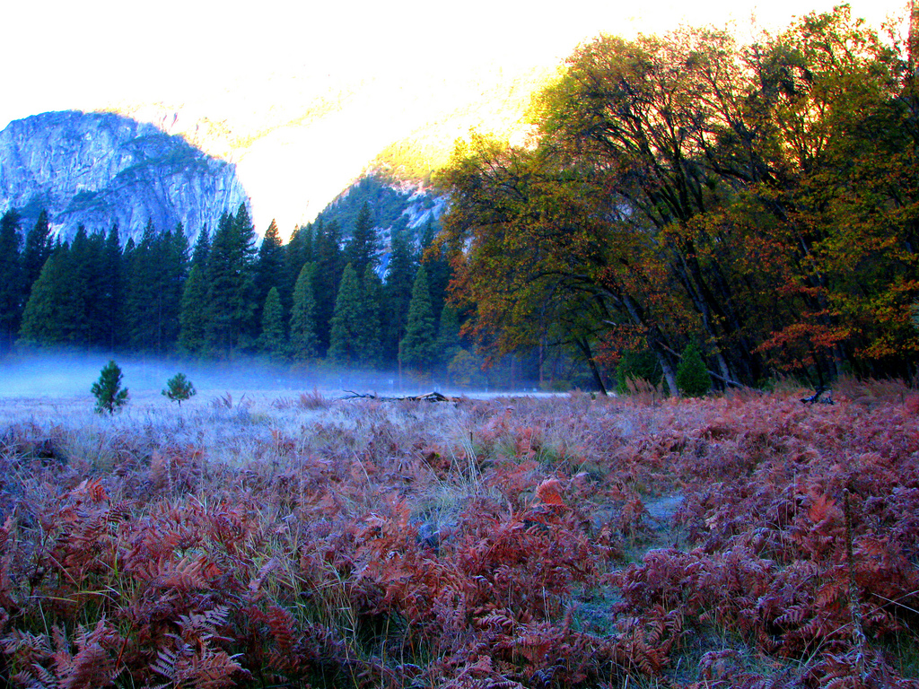 red meadow by Rennett Stowe, on Flickr