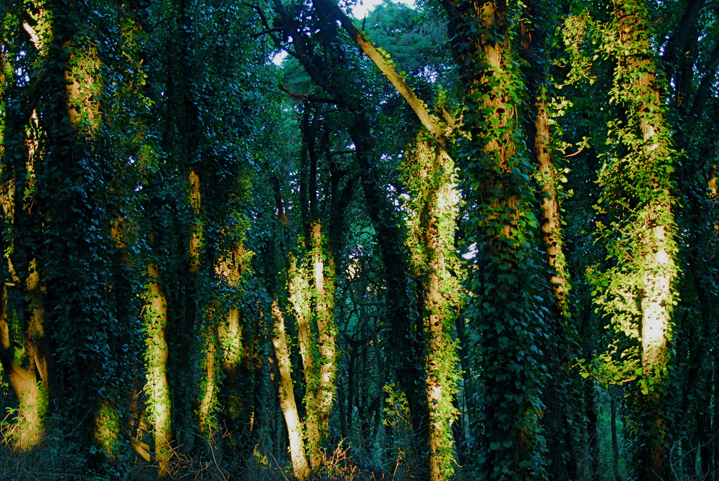 Magic forest by F H Mira, on Flickr
