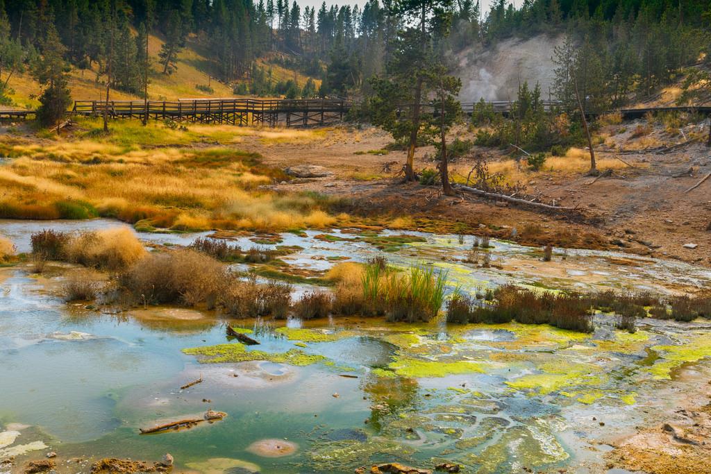 Swamp in Yellowstone by daniel.chodusov, on Flickr