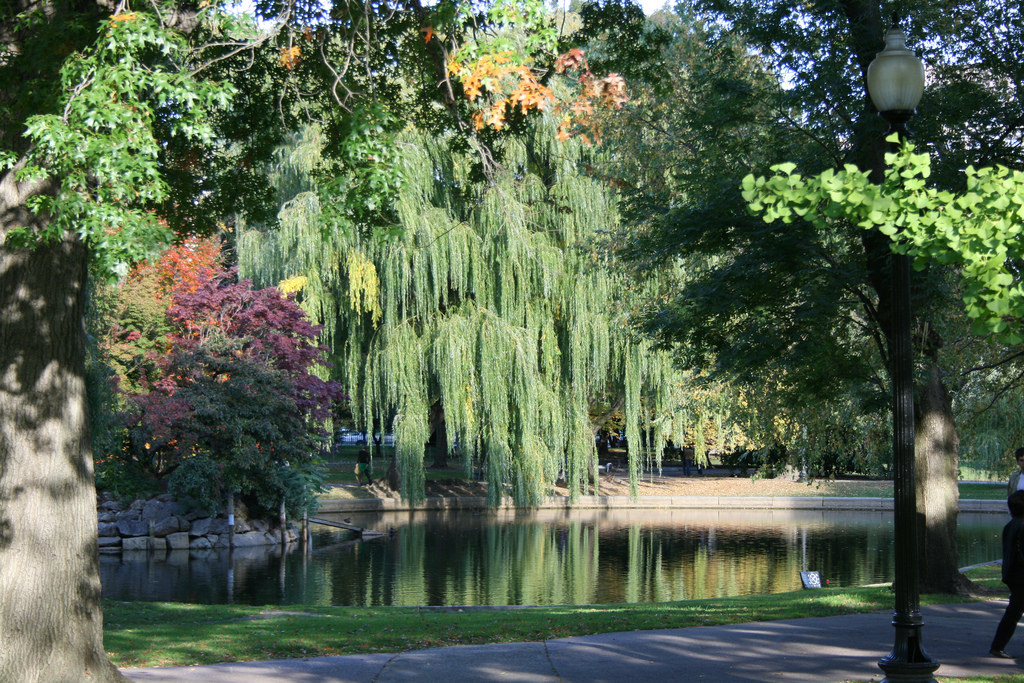 Weeping Willow & Pond at Boston Common by Jill Clardy, on Flickr